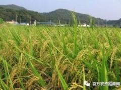 企业发展农资电商应该注意哪些问题
